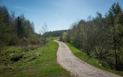 Footpath through trees at Sutton Manor