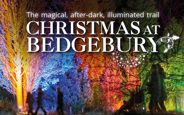 Discover the magic of Christmas at Bedgebury