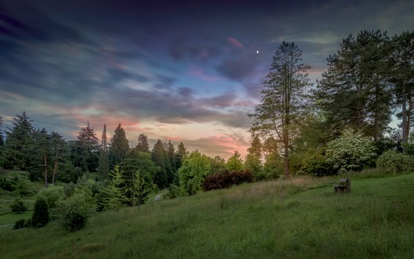 Bedgebury National Pinetum Dallimore Valley  sunset summer