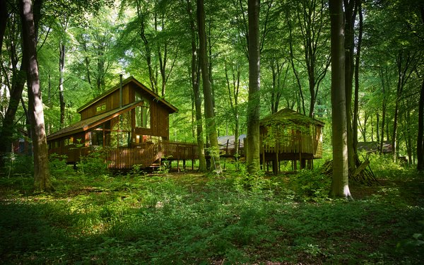 Forest Holidays treehouses at Blackwood Forest