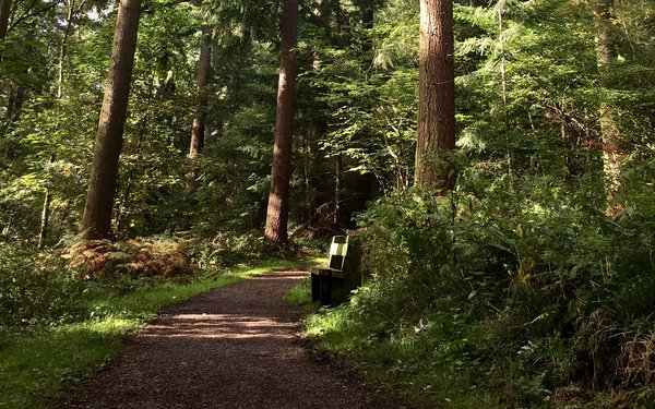 Mortimer Forest Easy Access Trail