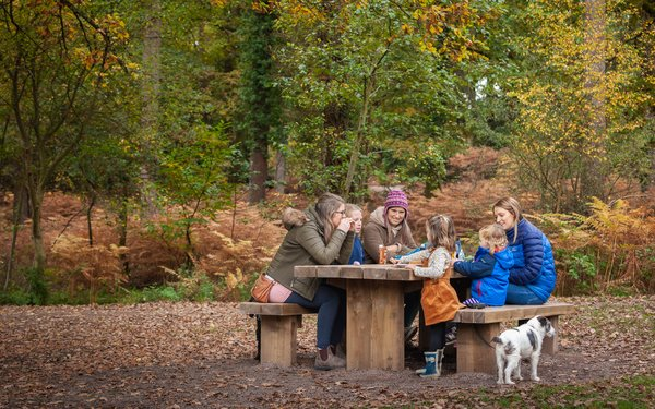 Group having picnic forest of dean