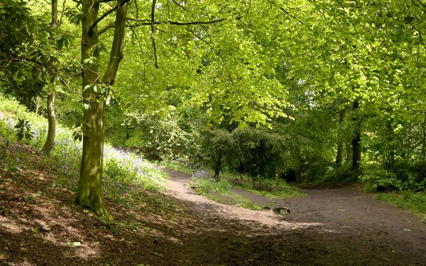 Shaded forest woodland walk