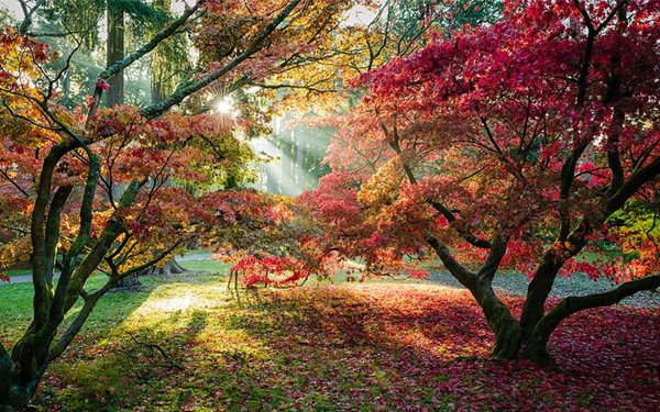 Autumn Westonbirt