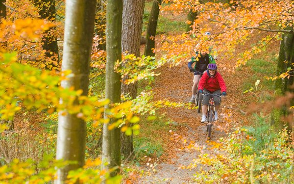 group mountain biking through autumnal trees