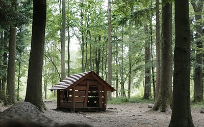 Shadey forest scene with wooden cabin