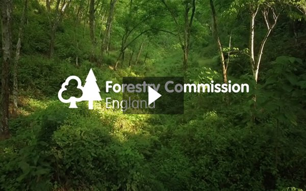 Shape the future of forest management in the Forest of Dean