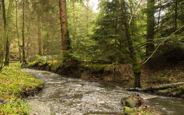 River running through Cropton Forest