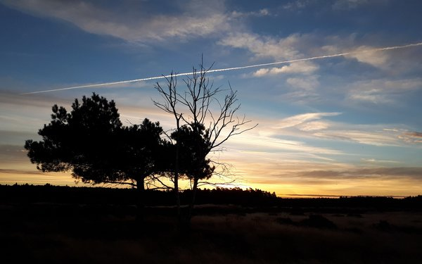 Thetford Forest at sunset