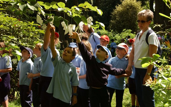 School children looking at the handkerchief tree