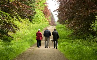 Three people walking along a forest track