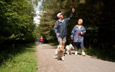 adults on forest walk