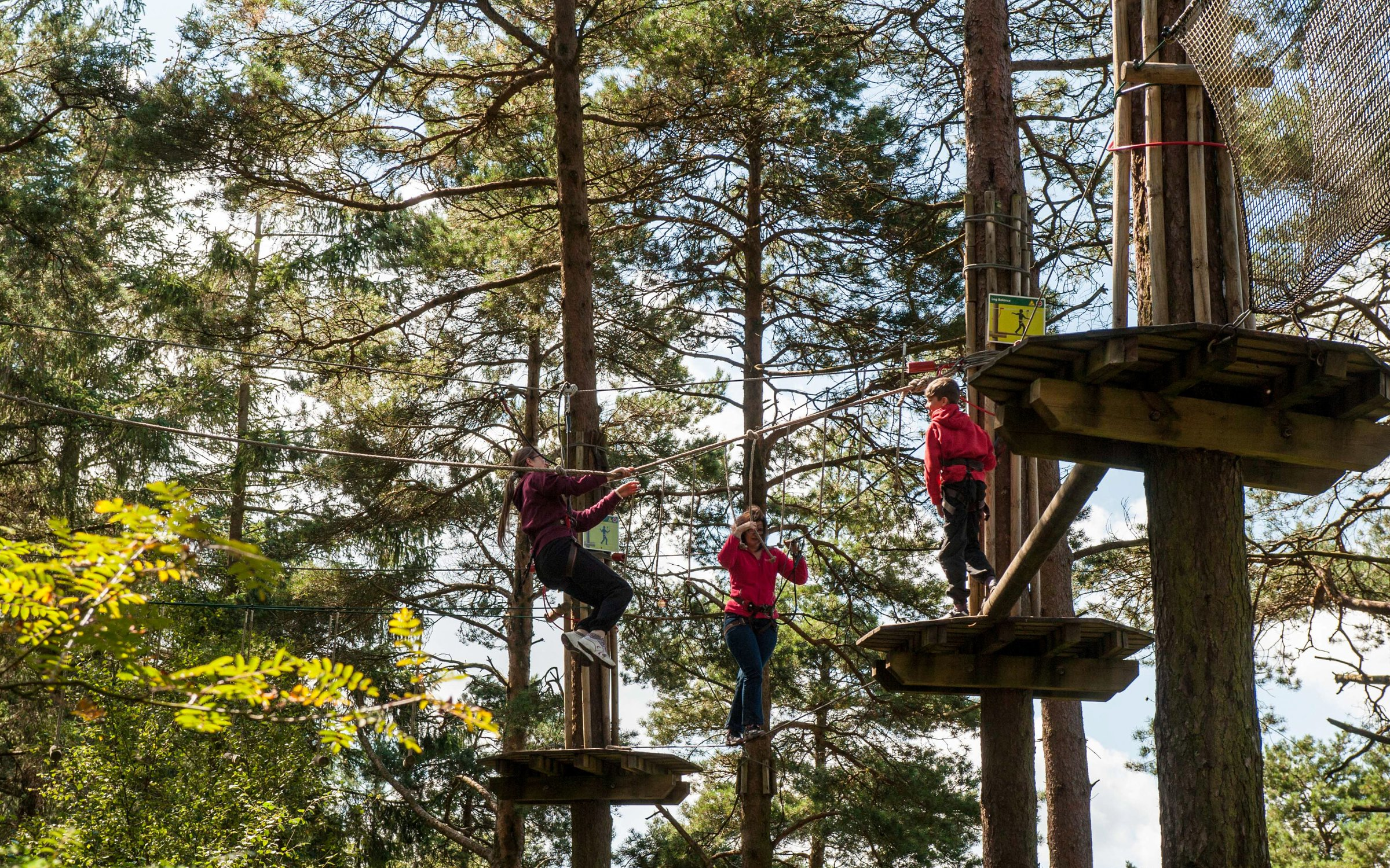 Go Ape Tree Top Challenge At Bedgebury Forestry England