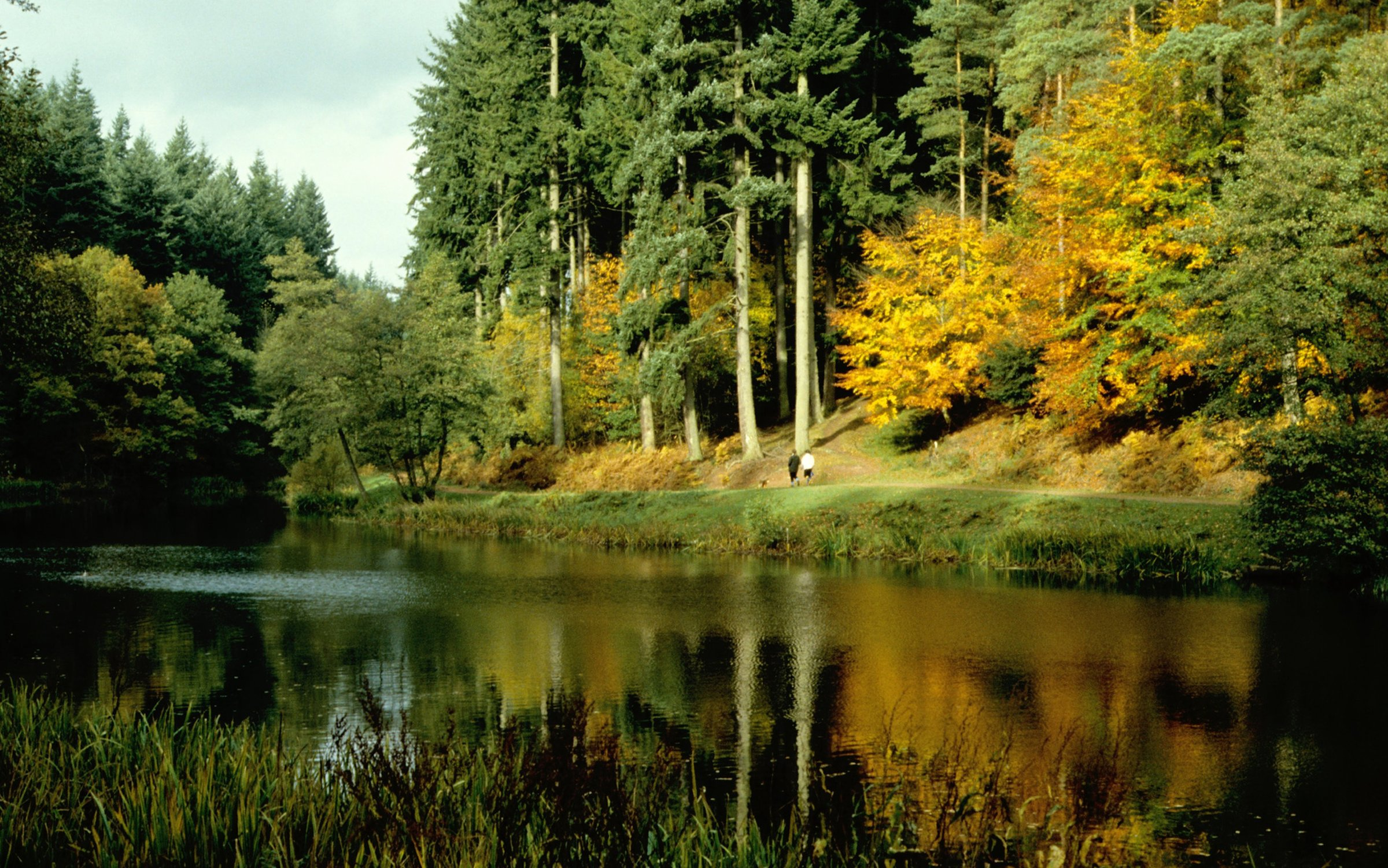 Soudley Ponds | Forestry England