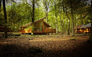 Autumn at Blackwood Forest - Forest Holidays