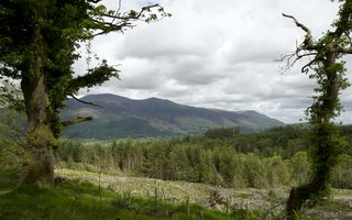 Whinlatter forest view from Heavy Sides walking trail