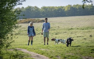 Dog walking on Butchers Trudge trail at Friston Forest