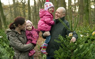 Family choosing a christmas tree