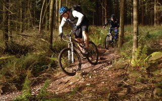Mountain biking in the wood