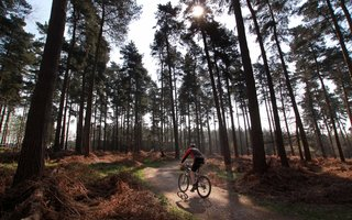 Solo mountain biker in a forest