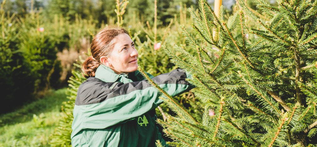 Woman selecting Christmas tree