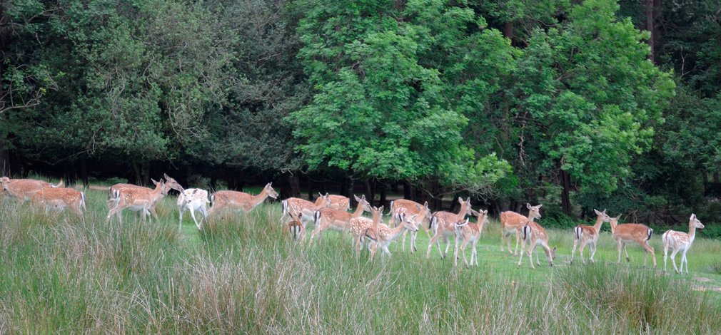 A herd of deer in a glade in the forest