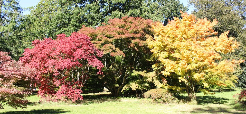 Autumn Colour Westonbirt