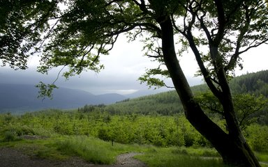 Walking trail at Whinlatter Forest