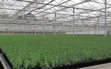 Saplings growing in large glasshouse
