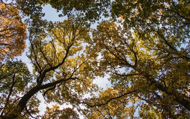 Broadleaf autumn canopy