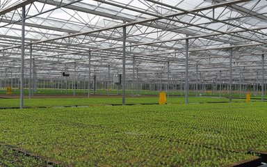 trays of tree seedlings growing in a large glasshouse