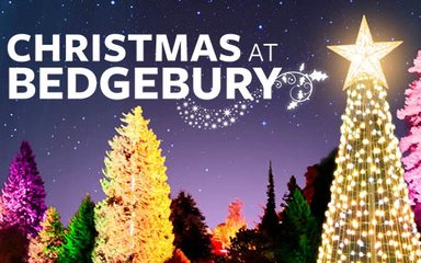 Christmas at Bedgebury light trail header image 2020