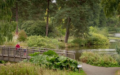 Bedgebury National Pinetum Marshal's Lake early autumn parent child walking