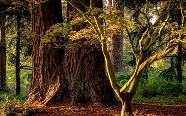 Trees in Bedgebury National Pinetum and Forest