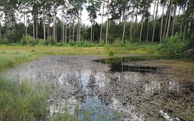 Boggy pool of water within a forest