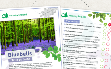 Bluebells True or False activity sheets