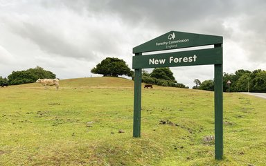 New Forest sign in front of cattle