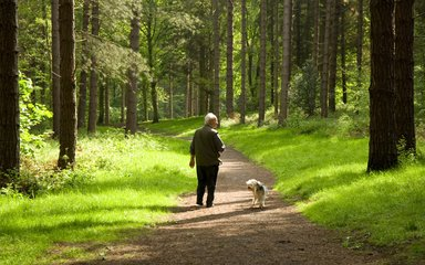 Man walking dog along woodland trail