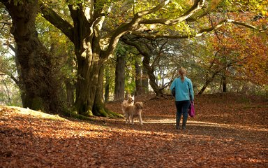 Dog walking in autumn among leaves