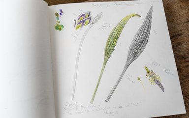 Bedgebury Pinetum Florilegium Society, paintings by Pearl Bostock