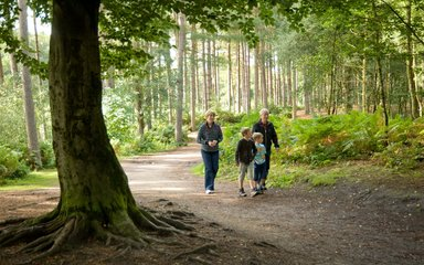Family walking through pine forest