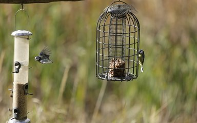 Birds feeding at wildlife hide at fineshade wood