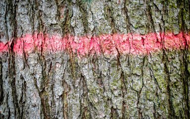Red paint line sprayed on to tree trunk