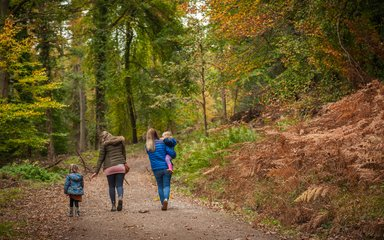 Family walking through autumnal forest