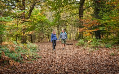 Couple walking in autumn forest