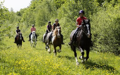 Horse cantering at Hicks Lodge on horse route