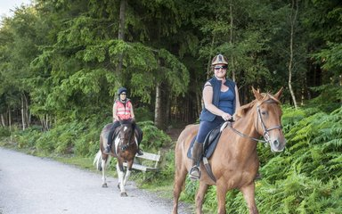Horse riding Haldon Forest