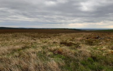 View over mire landscape on cloudy day