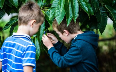 Boy looking at leaf learning