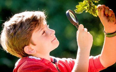Boy looking at leaves with microscope